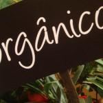 Alimentos orgânicos: mais seguros e saudáveis que os convencionais?