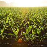 Como consultar os agrotóxicos que podem ser utilizados nos alimentos e quais os limites máximos