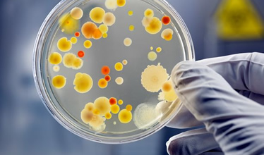 featured image Novos Desafios do Controle Microbiológico dos Alimentos