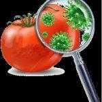 Salmonella em tomate recebe atenção especial do FDA