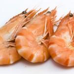 Revista americana encontra antibiótico em camarões importados