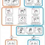 A importância das mãos na prevenção da veiculação de DTA