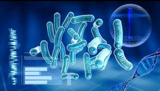featured image O uso da tipagem microbiana como ferramenta para controle de qualidade – Resumo da Palestra do IV Workshop Internacional em Food Safety