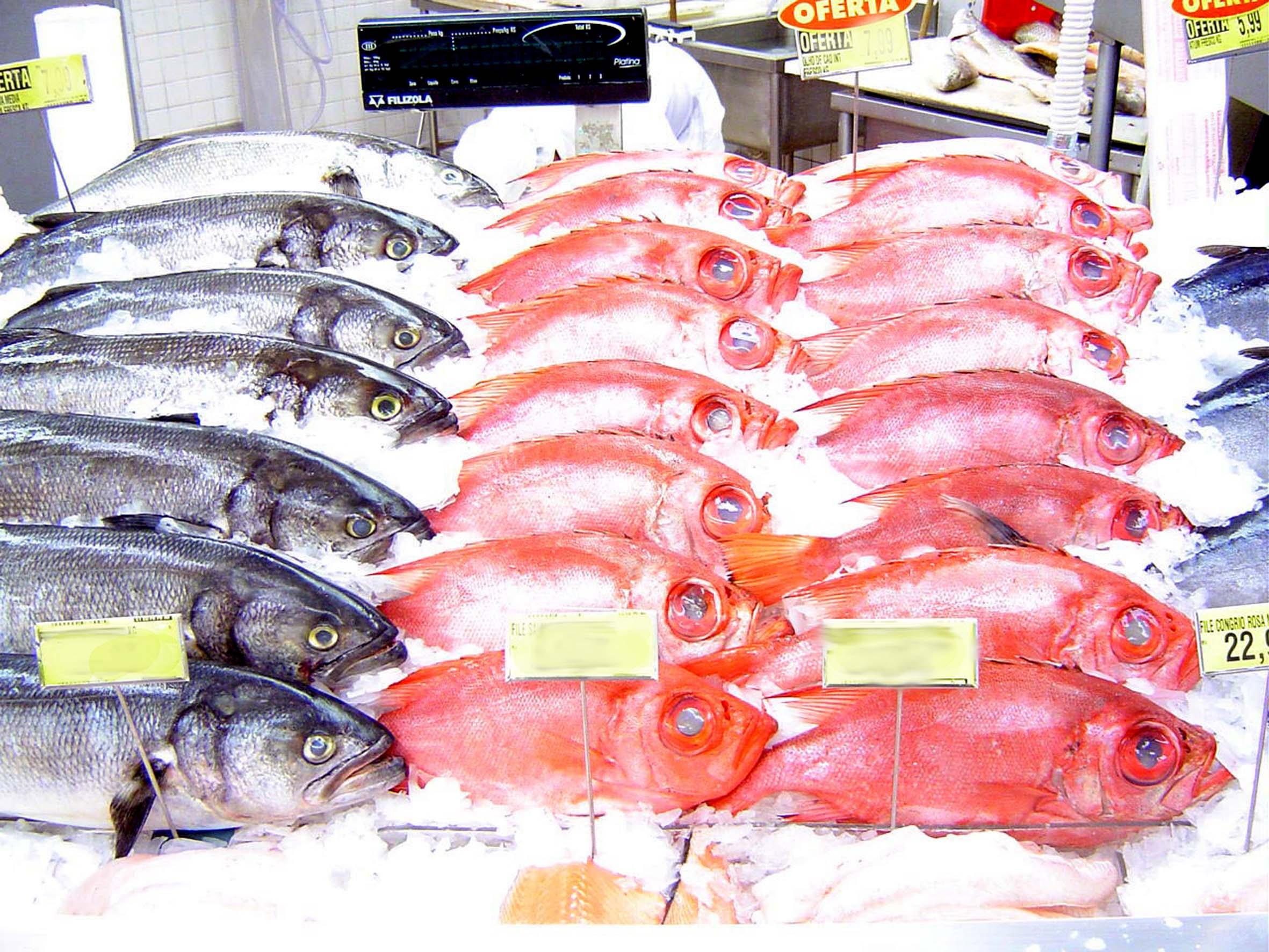 featured image Histamina e rastreamento de pescado: revisão de literatura
