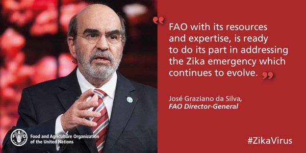 featured image Diretor da FAO pondera que combate ao Zika deve preservar a inocuidade da cadeia de alimentos