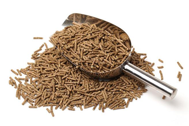 featured image Alimentos de origem animal: afinal, onde começa a Segurança de Alimentos nessa cadeia?