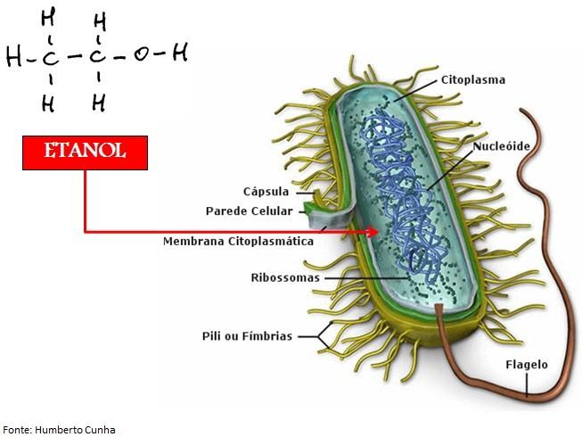 featured image Afinal, por que o álcool 70% é mais eficaz como bactericida que o álcool absoluto?