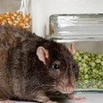 Sujidades nos alimentos LEGALMENTE aprovadas pela ANVISA