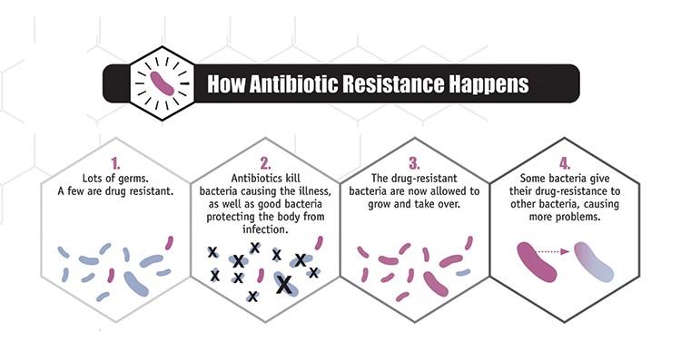 featured image Resistência aos antibióticos – Impacto para Segurança de Alimentos