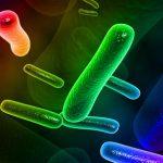 Avaliação de Riscos Microbiológicos – Palestra do IV Simpósio 3M Food Safety
