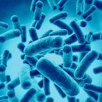 Top 5: Sorotipos de Salmonella relacionados a surtos alimentares