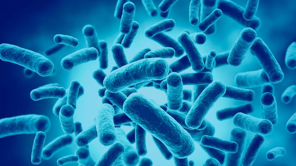 featured image Top 5: Sorotipos de Salmonella relacionados a surtos alimentares