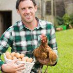 Dia Mundial do Ovo (14 de Outubro)