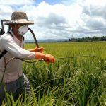Se agrotóxico faz mal à saúde, por que é permitida sua aplicação na agricultura?
