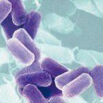 Considerações sobre o padrão microbiológico para Bacillus cereus em leite em pó e outros produtos lácteos