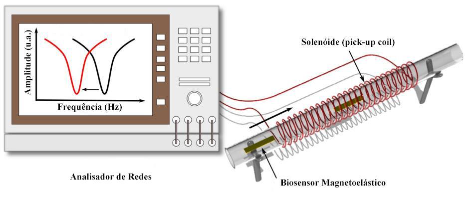 featured image Pesquisador brasileiro desenvolve biossensor para análise rápida de E. coli