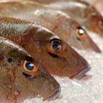 A importância da microbiologia na cadeia de pescado e seus impactos na segurança de alimentos:  entrevistamos Dr. Edivaldo Sampaio, Universidade Federal do Mato Grosso
