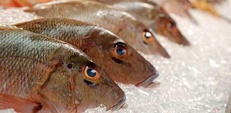 featured image A importância da microbiologia na cadeia de pescado e seus impactos na segurança de alimentos:  entrevistamos Dr. Edivaldo Sampaio, Universidade Federal do Mato Grosso