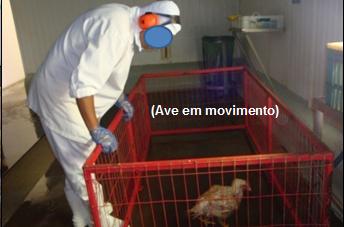 featured image A contribuição da inspeção ante-mortem de frangos para a Segurança de Alimentos