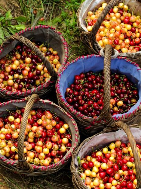cestas-llenas-de-fruta_1088-137