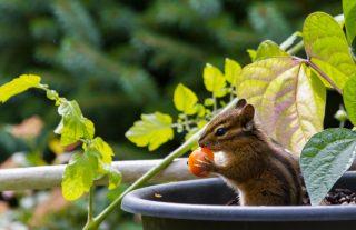 pelo de roedor faz mal foodsafetybrazil