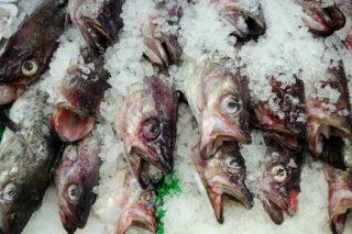 qualidade pescado foodsafetybrazil