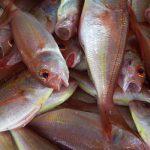 Controle de potabilidade da água no glaciamento de pescados