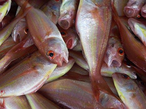 featured image Controle de potabilidade da água no glaciamento de pescados