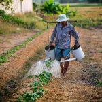 Sustentabilidade e Segurança de Alimentos: dois mundos que precisam estar em harmonia