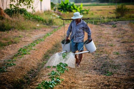 featured image Sustentabilidade e Segurança de Alimentos: dois mundos que precisam estar em harmonia