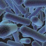 Cinco locais onde a Listeria monocytogenes pode se esconder na indústria de alimentos