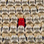 Food Fraud: tendências na integridade e autenticidade dos ingredientes