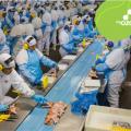 featured image Ozônio: uma alternativa segura para as indústrias de alimentos