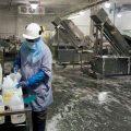 featured image É necessário enxágue após sanitização das instalações, equipamentos e utensílios em abatedouro frigorífico (aves)?