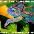 featured image Quociente de Adaptabilidade (QA) na gestão da segurança de alimentos