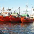 featured image Como o peixe fresco é resfriado e armazenado em um navio de pesca – Estudo de caso